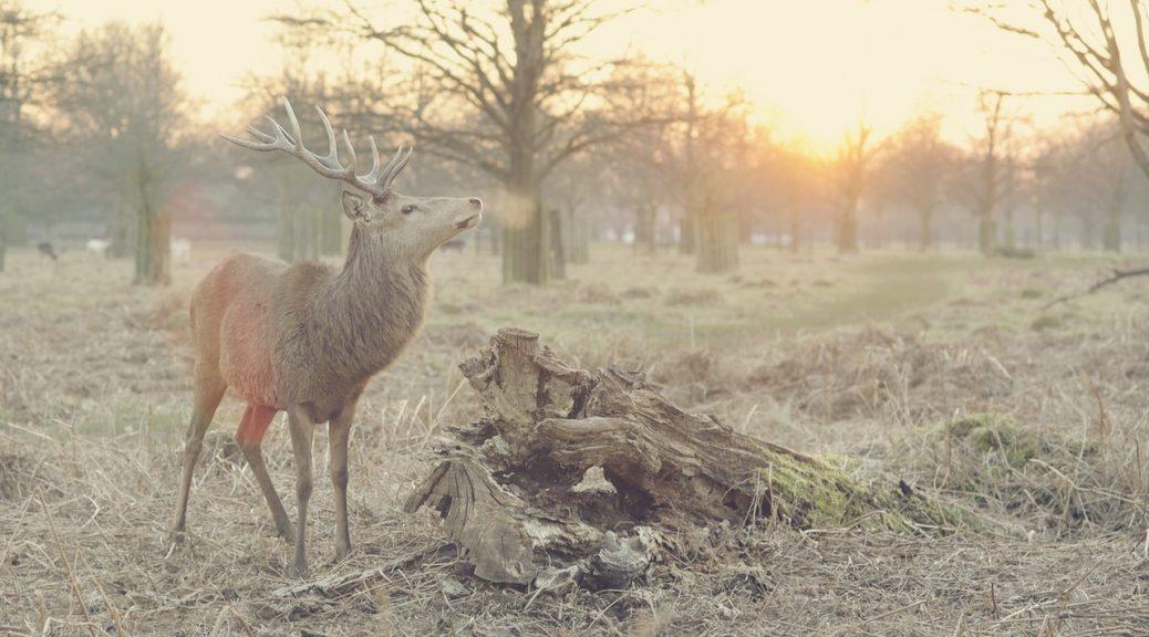 Deer Antler Velvet | Clearwater Nutrition Lab